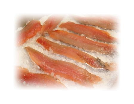 sardina arenque